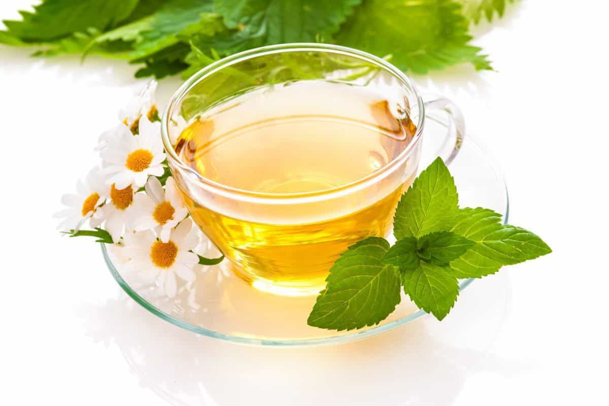 herbal remedies boost immune system function
