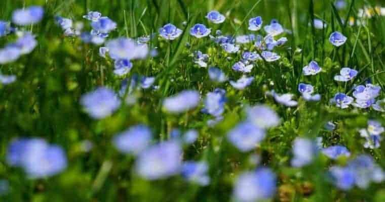Bach Flower Remedies Natural Supplements For Anxiety
