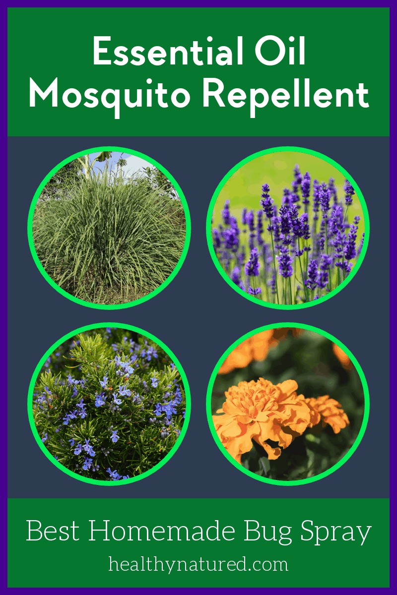 Discover the best essential oil mosquito repellent.  Learn the plants to use to create a homemade bug spray that keeps your summer pest free!