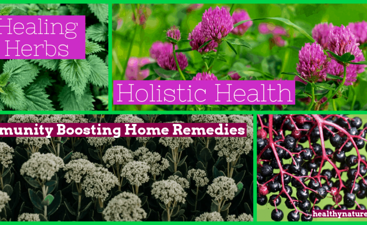 Healing Herbs And Holistic Health - Immunity Boosting Home Remedies Post