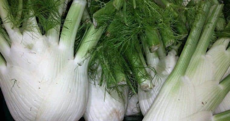 fennel - natural remedies for anxiety