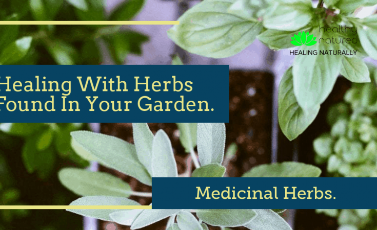 Medicinal Herbs - Healing With Herbs Found In Your Garden