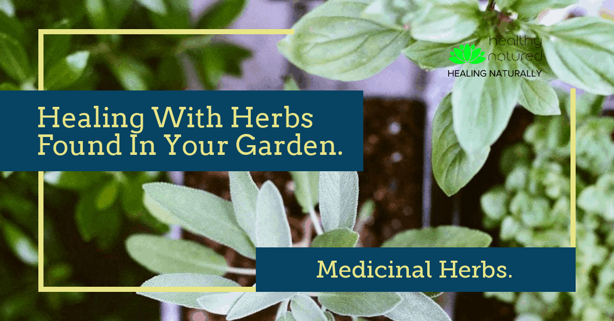 Medicinal Herbs – Healing With Herbs Found In Your Garden.