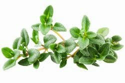 thyme leaf- homemade herbal cough syrup
