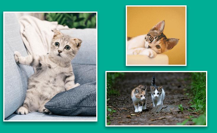 8 Ways Pets Help Health