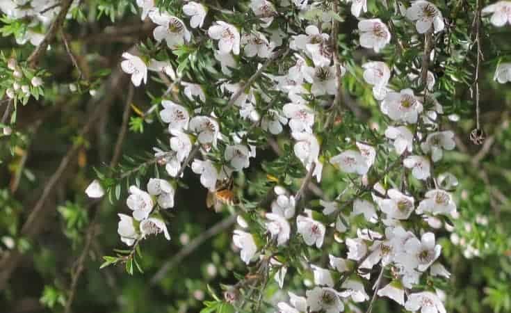 Tea Tree Treatment
