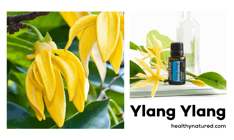 Amazing Aromatherapy Benefits For Health - Ylang Ylang To Speed Healing