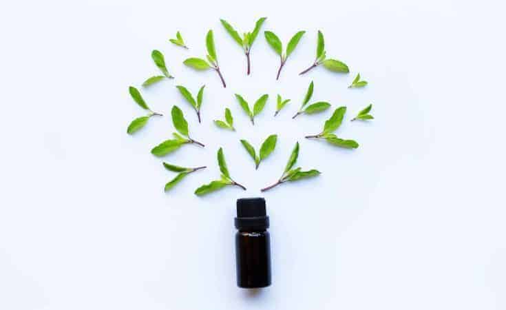 Holy Basil Essential Oil - Holistic Massage To Reduce Stress